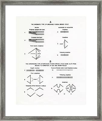 Chromosome Breakage Diagrams Framed Print