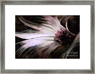 Chrysanth Framed Print by Shanina Conway
