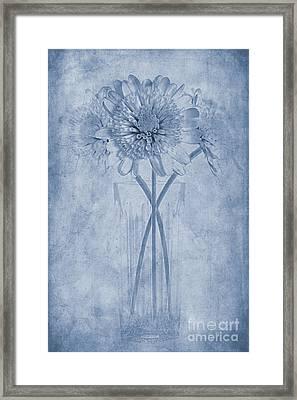 Chrysanthemum Cyanotype Framed Print by John Edwards