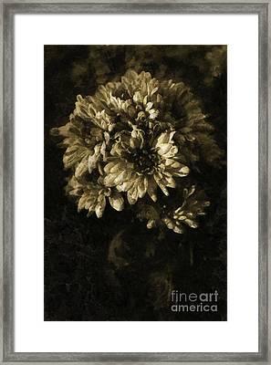 Chrysanthemum Framed Print by Dariusz Gudowicz