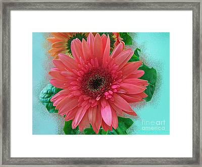 Framed Print featuring the photograph Chrysanthemum by Gena Weiser