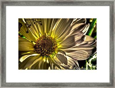 Chrysanthemum Framed Print by Helene Kobelnyk