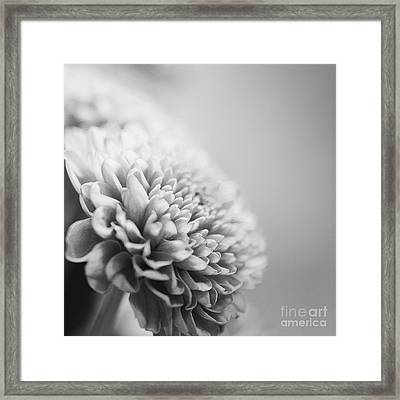 Chrysanthemum In Black And White Framed Print