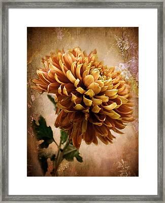 Chrysanthemum Framed Print by Jessica Jenney