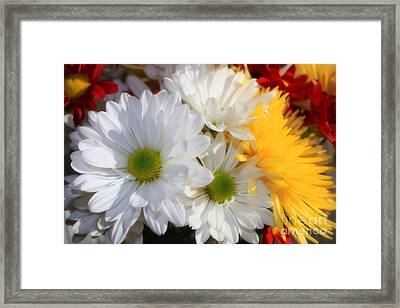 Framed Print featuring the photograph Chrysanthemum Punch by Cathy  Beharriell