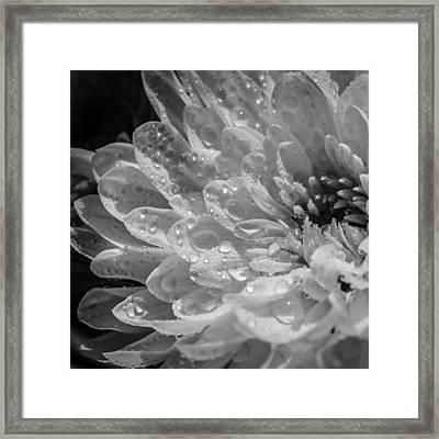 Chrysanthemum Squared Framed Print