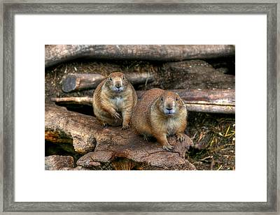 Chubby Pair Framed Print