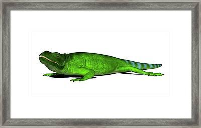 Chuckwalla Lizard Framed Print by Friedrich Saurer