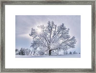 Church Tree Framed Print by Tommy  White