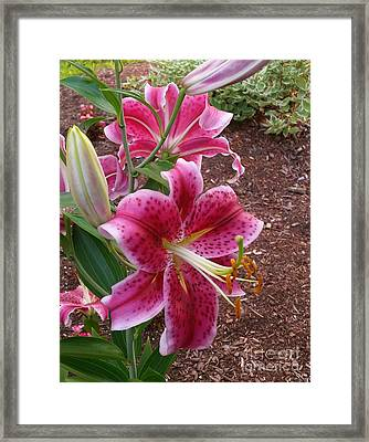 Framed Print featuring the photograph Cibuloviny Flower by Rose Wang