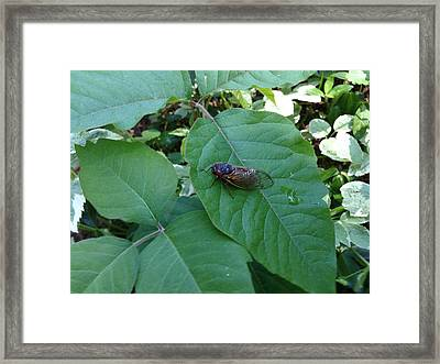 Cicada Invasion Framed Print