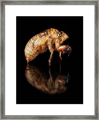 Cicada Framed Print by Jim Hughes