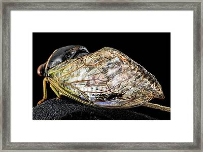 Cicada Framed Print by Us Geological Survey