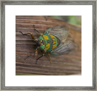 Green Whizzer Cicada Framed Print