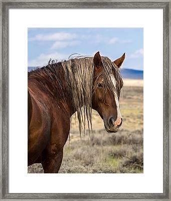 Cimarron - Wild Mustang Stallion Framed Print