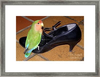 Cinderella Pickle Framed Print