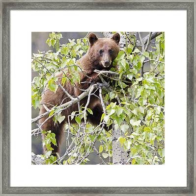 Cinnamon Beauty Framed Print