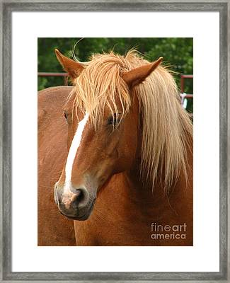 Cinnamon Girl Framed Print