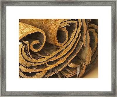 Cinnamon, Sem Framed Print