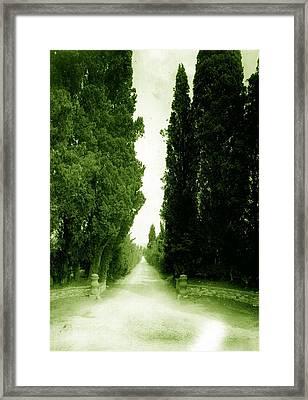 Cipressi Framed Print by Sandro Zuffanelli