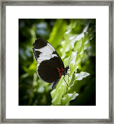 Circle Framed Print by Jean Noren