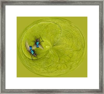 Circle Of Flies Framed Print by Jean Noren