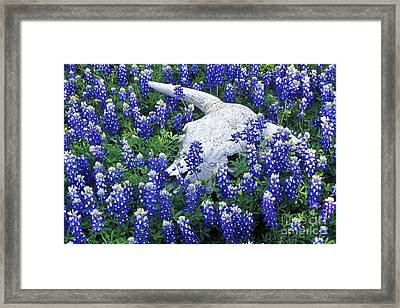 Circle Of Life - Fs000058 Framed Print