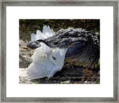 Framed Print featuring the photograph Circle Of Life by Kathy Ponce