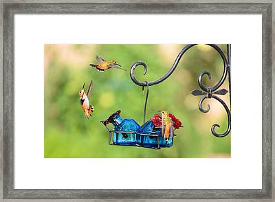 Circle Of Life Framed Print by Lynn Bauer