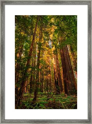 Circle Of Light - California Redwoods Framed Print by Dan Carmichael
