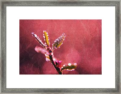 Circles From Nature - C33st04a Framed Print