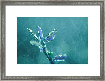 Circles From Nature - C4t04c Framed Print