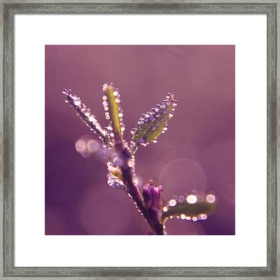 Circles From Nature - M01sqm Framed Print