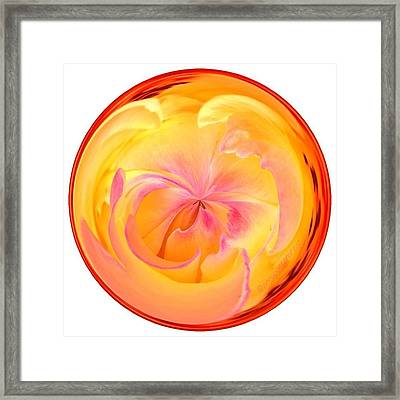 Circumspect Rose Framed Print by Anna Porter