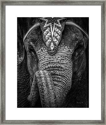 Circus Elephant Framed Print by Bob Orsillo