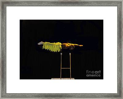 Cirque 2 Framed Print by Cindy Lee Longhini