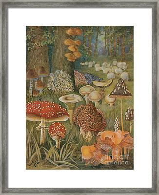 Citizens Of The Land Of Mushrooms Framed Print by Science Source