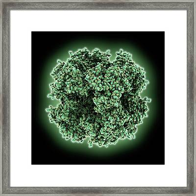Citrate Acid Cycle Enzyme Framed Print by Laguna Design