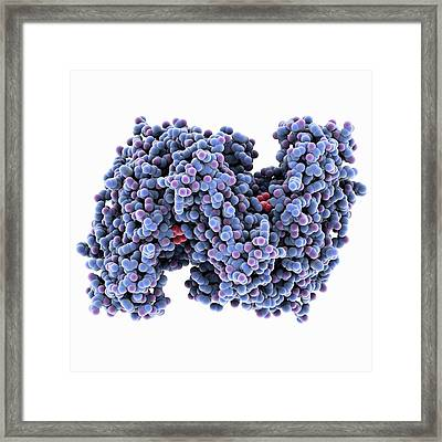 Citrate Synthase Molecule Framed Print by Laguna Design