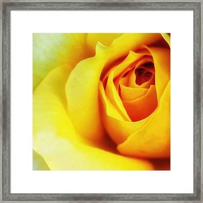 Citrine Rose Palm Springs Framed Print