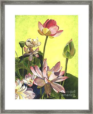 Citron Lotus 1 Framed Print