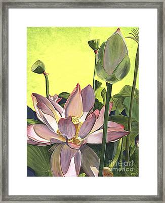 Citron Lotus 2 Framed Print by Debbie DeWitt