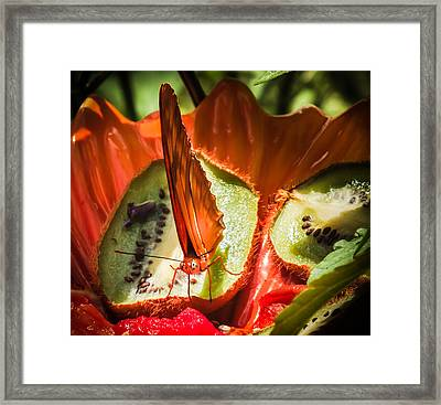 Citrus Butterfly Framed Print by Karen Wiles