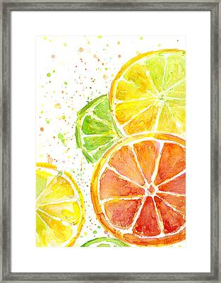 Citrus Fruit Watercolor Framed Print by Olga Shvartsur