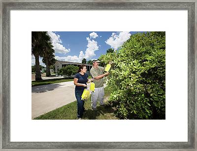 Citrus Greening Disease Research Framed Print