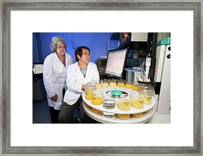 Citrus Greening Disease Research Framed Print by Stephen Ausmus/us Department Of Agriculture