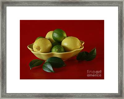 Citrus Passion Framed Print by Inspired Nature Photography Fine Art Photography