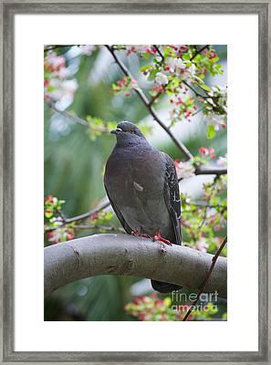 City Bird Framed Print by Debbie Ames