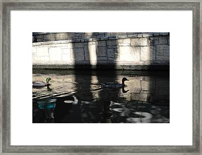 City Ducks Framed Print by Shawn Marlow