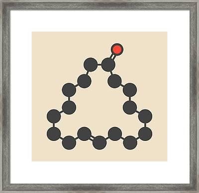 Civetone Civet Cat Pheromone Molecule Framed Print by Molekuul